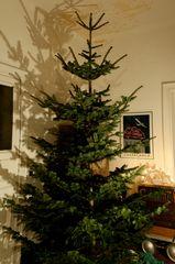 erster Akt: er steht - der Weihnachtsbaum ( .. !)