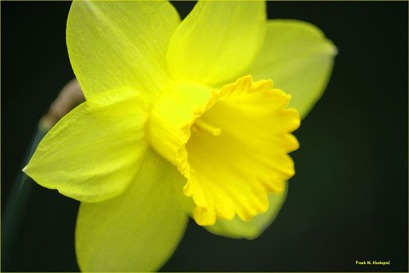 Erster Blumenversuch
