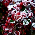 * Erster Frost *