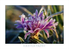 Erster Frost II
