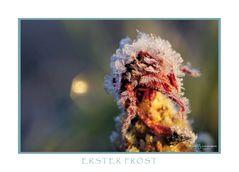 Erster Frost III