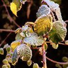erster Frost ....im Kontakt mit der wärmenden Sonne
