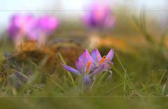 erster Frühling (2)