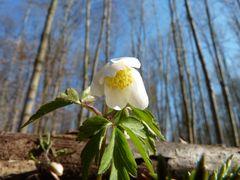 Erster Frühlingsgruss 2