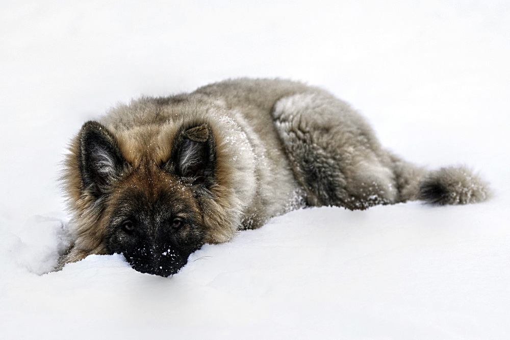 ...erster Schnee