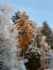 Erster Schnee in 2010