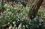 Erstes Blühen im Jasmunder Wald
