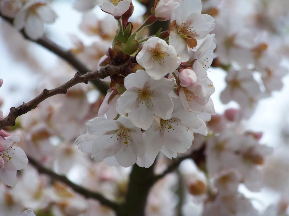 erstes Frühlingserwachen