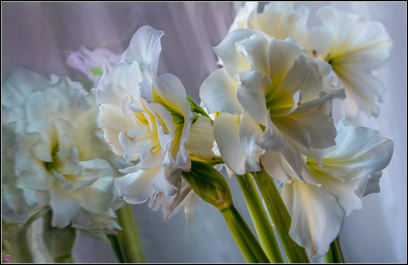 erstes Licht des Frühlings ...