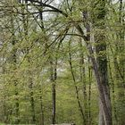 Erstfrühling im Korker Wald