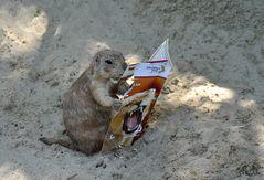 erstmal die neuesten Zoo-Nachrichten lesen