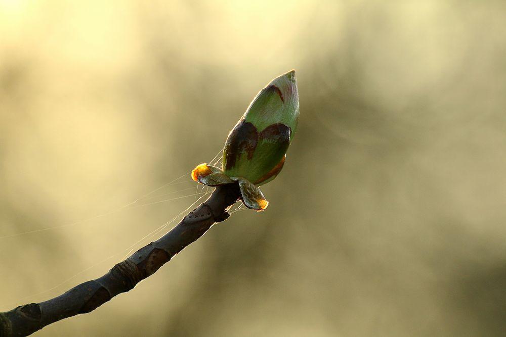 erwachende Natur