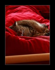Erwischt beim Mittagsschlaf ;-)