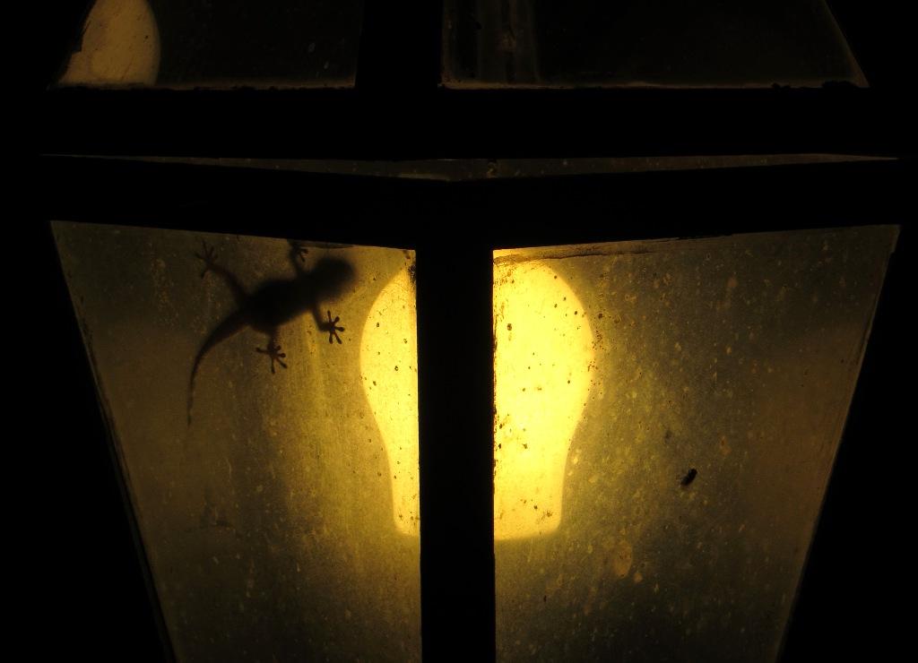 erwischt in einer Lampe