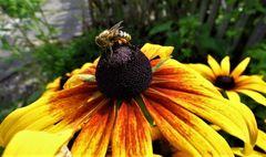 Erwischt mit Pollen