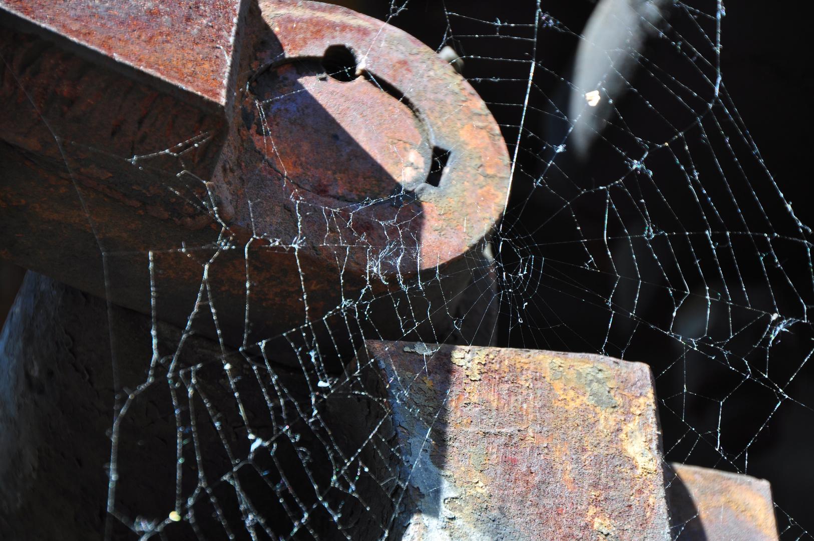 es bilden sich Spinnenweben