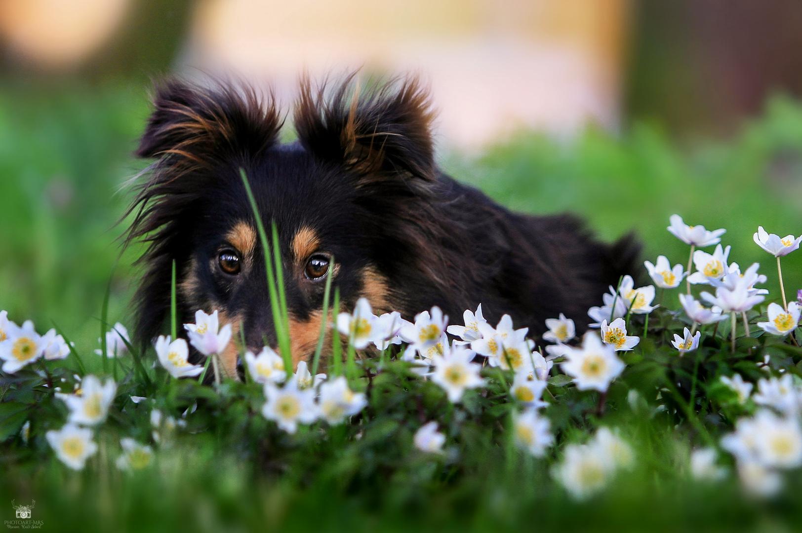 Es duftet nach Frühling...
