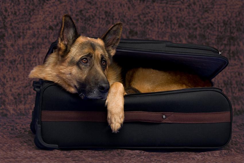 Es geht eine Träne auf Reisen :-)