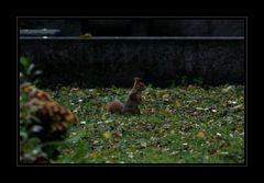 Es gibt auch Leben auf dem Friedhof