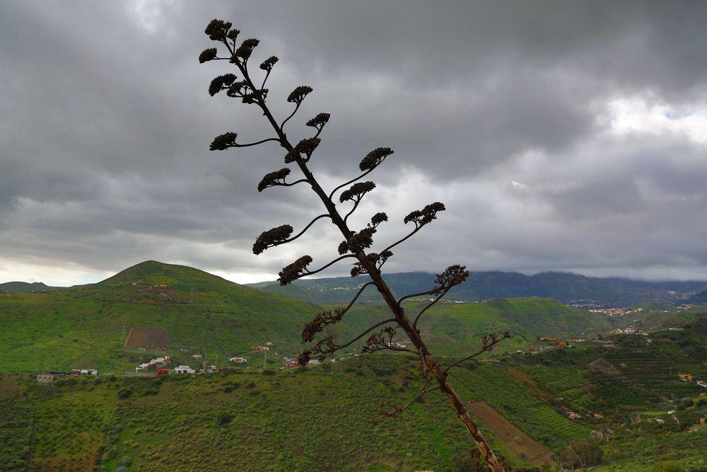 Es gibt auch Regen auf Gran Canaria ...
