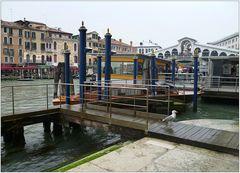 Es gibt nicht nur Tauben in Venedig ...