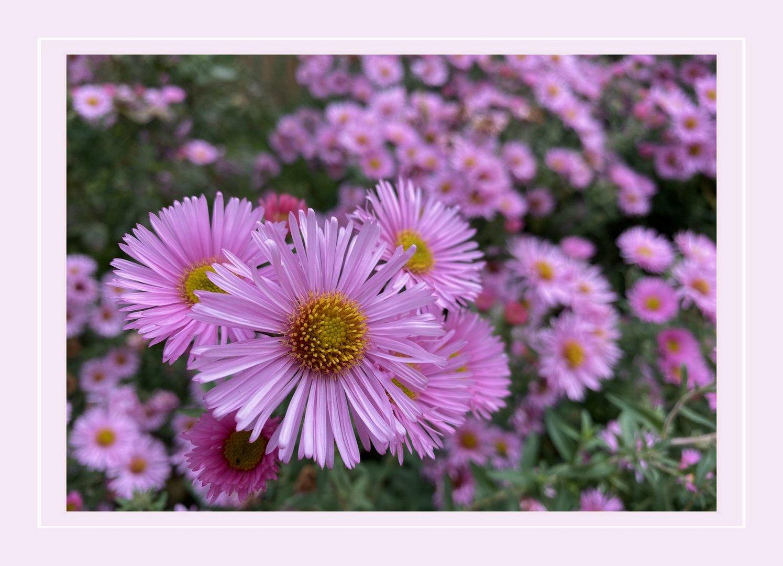 Es gibt überall Blumen