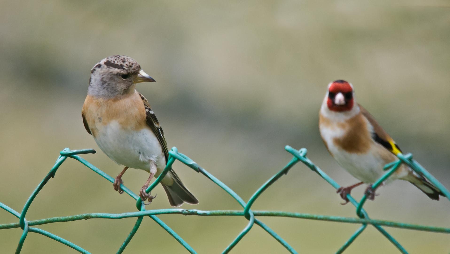 Es gibt Vögel, die lassen andere trüb aussehen ;-)))