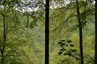 es grünt der Wald