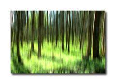 Es grünt im Wald