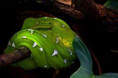 Es grünt so grün