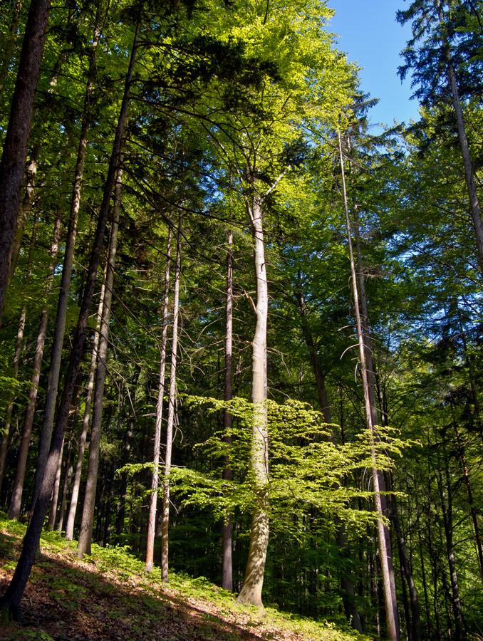 Es grünt so schön in Gratweins Wäldern!