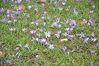Es grüßt der Frühling