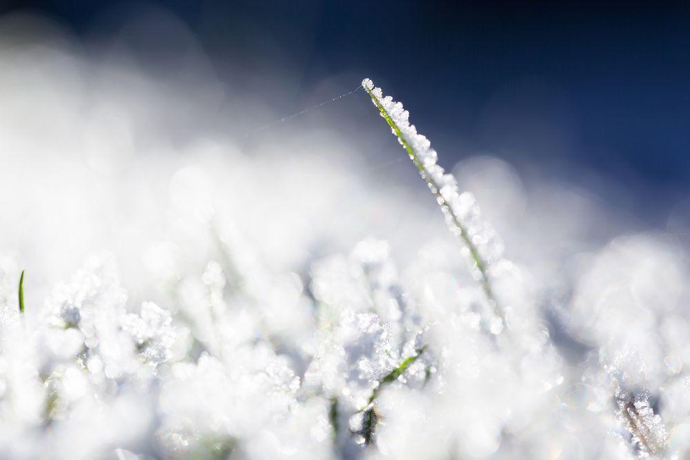 Frost Heute Nacht