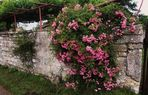 es hat uns Keiner einen Rosengarten versprochen aber manchmal finden wir ihn doch