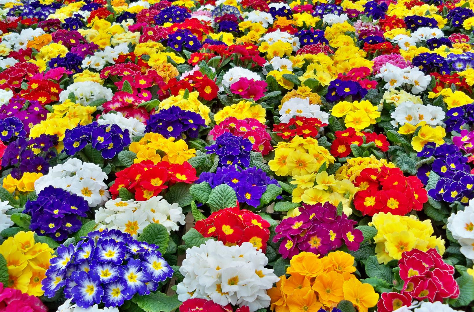 es ist Frühling :)