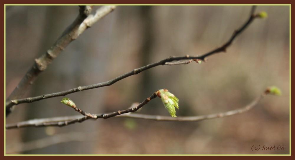 Es ist Frühling - Mutige zuerst....!