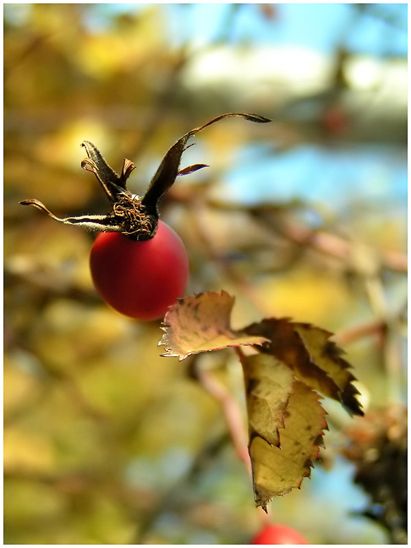 Es ist Herbst 4