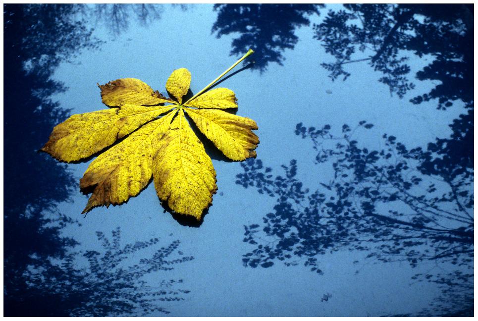 ...es ist Herbst - die Blätter fallen...
