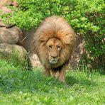 Es ist Löwenzeit