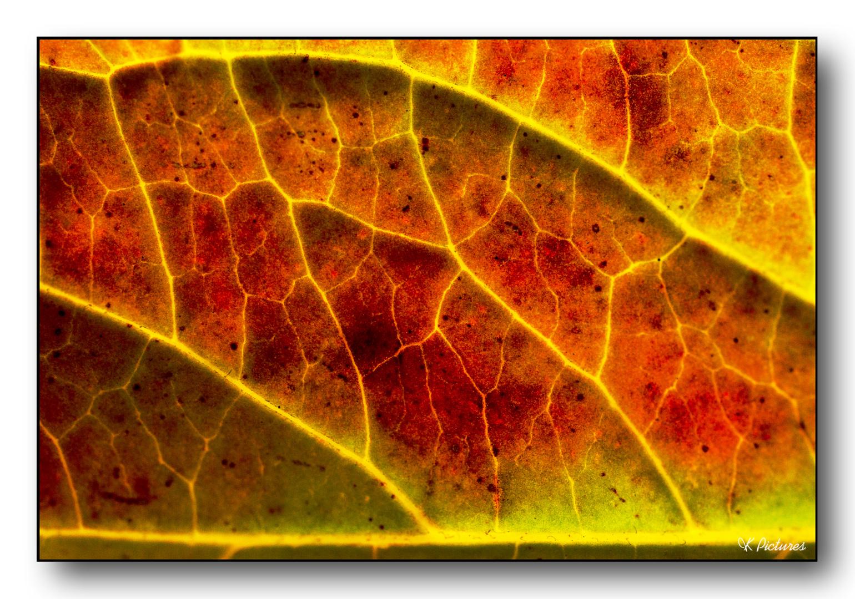 Es ist schon Herbst, sagt das Blatt...