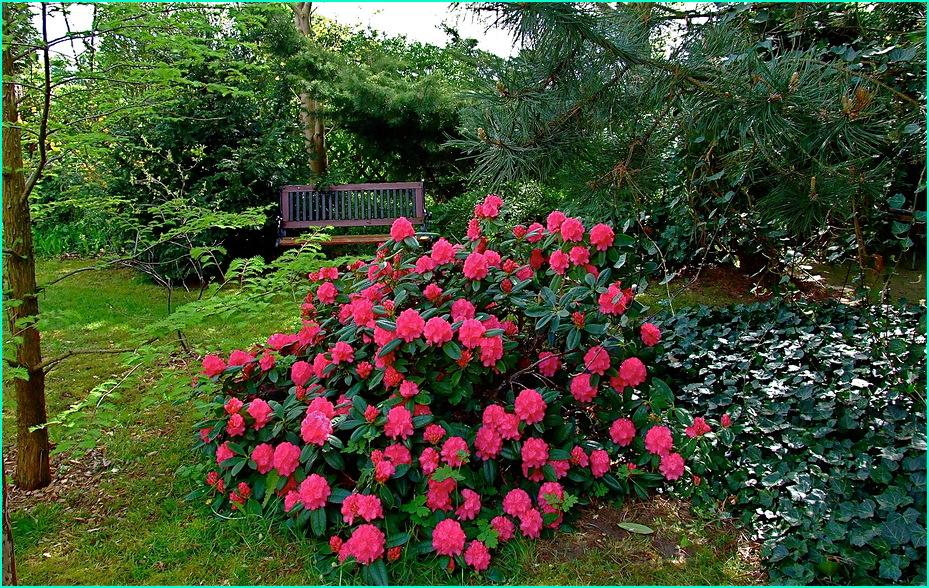 Es ist wieder Rhododendrenzeit***So gefällt mir auch mein Garten wieder.