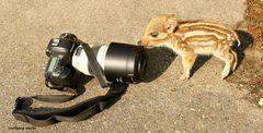 Es kann losgehen ich bin schon mal da! Obelix als Fotomodel.