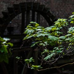 Es klappert die Mühle am grünenden Busch, klipp klapp, klipp klapp...#1.588##
