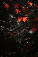Es leuchten die letzten Blätter