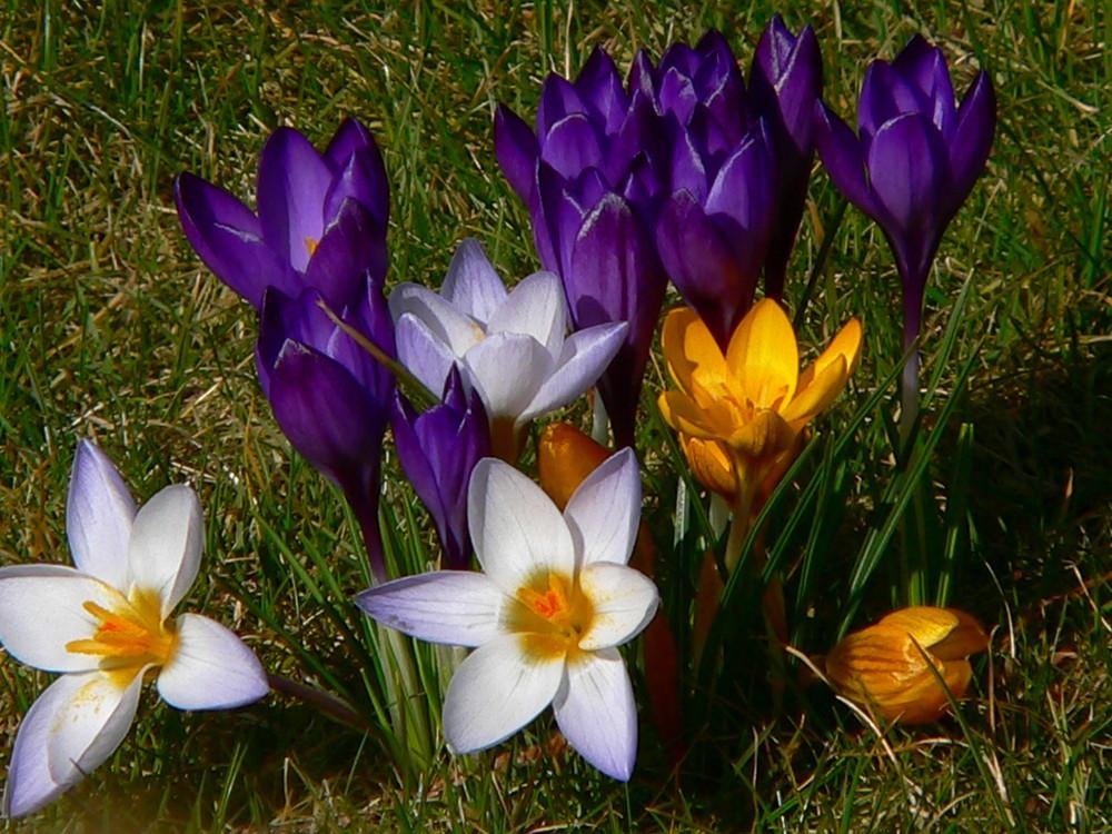 Es muss doch Frühling werden ...