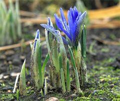 Es muss doch Frühling werden