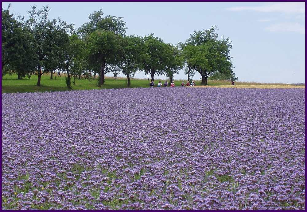 Es muß nicht immer Lavendel sein...