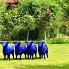 ... es riecht hier nicht nach Schaf -