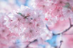 ... es riecht nach Frühling!