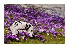 Es riecht nach Frühling